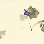 菫 watercolor,paper  10×14.8cm