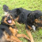 Barney und Lennox (2009) - Küss- und Kuschelhunde