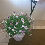 サロンの前にもお花が・・・