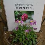 星のサロン・・・今日も可愛いお花が出迎えてくれました!