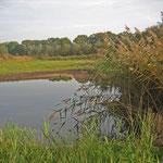 Arbeiten abgeschlossen. Den Rest überlassen wir, so weit wie möglich, der Natur. Der Wasserpegel steigt, am 12.11.2012 haben wir bereits einen Wasserstand von 1,10m .