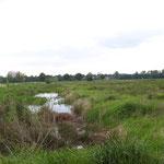 Vom NABU angelegte Wasserflächen