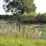 Teich Am Weißen Moor (15.11.2013)