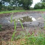 Auf unserem Grundstück am Kuhteichweg in Heiligenrode haben wir ein neues Paradies für Amphibien geschaffen (12.9.2012).