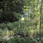Wald Am Weißen Moor (15.11.2013)