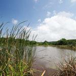 Wasserloch im Inkwenkwezi Game Reserve
