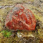 roter Bakterienbefall auf dem Stein