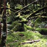 Wald bei der Mac Kenzie Hütte