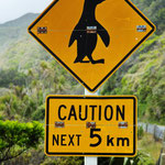 Pinguine kreuzen Fahrbahn