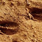 Deine (Impala)spuren im Sand