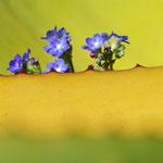 aus einer Agave wachsen Blümeleins