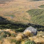 Blick auf den Ahukawakawa-Sumpf