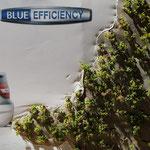 kurze Werbeunterbrechung: das Grünzeug ist gepflanzt
