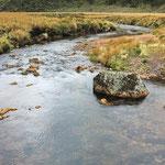 im Ahukawakawa-Swamp, Sumpf