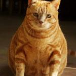 er heißt wirklich Garfield
