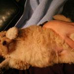 de taak van een knuffelhond is ? knuffelen!