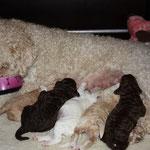 Etenstijd voor mams en de puppen