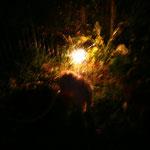 sterretjes in de tuin (de afstand was wel veilig het lijkt op de foto maar eng)