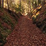 Bei Ebersdorf ist ein Weg besonders eingetieft, im Volksmund der Fallrangen genannt. Weil durch das Gewicht derRäder, die Hufe der Zugtiere und die Hemmschuhe die Bodenkrume immer aufgewühlt war, konnte der Regen das Erdreich wegschwemmen.