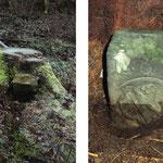 Dieser Wappenstein mit Bamberger Löwen ist in eine Fichte eingewachsen. Symbol für die vergehende Zeit.