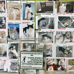 Благотворительная акция в Чебоксарах 4 октября 2011 г., в День защиты животных
