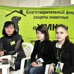 Выставка кошек в МТВ 29-30 октября.