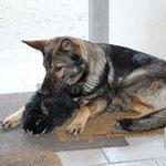 Ein Leckerli sollte man als Hund ohne zu kauen im Ganzen schlucken können. Dieses ist zu groß!!!     Neeee, war'n Spaß!!   ;-)