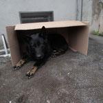 wir hatten sichere Luxus-Hundeboxen ...