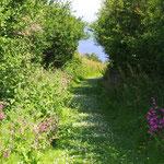 Chemin fleuri de l'île Milliau