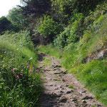 Chemin de l'île Milliau