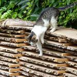 natürliche Holztrocknung