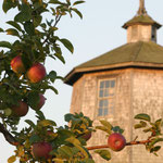 Wasserturm mit umgebender Apfelplantage