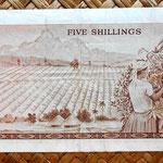 Kenia 5 shilingis 1968 (134x69mm) reverso