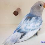 Arlequin cobalto