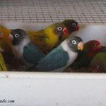 Grupo comiendo