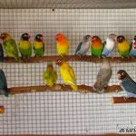 Grupo voladera