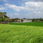 Land for sale in Canggu, Bali.