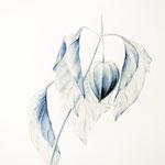 lampionplant, aquarel