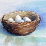 nestje eieren, aquarel