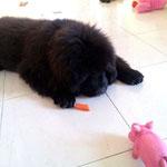 Wehe du frisst meine Karotte!!!