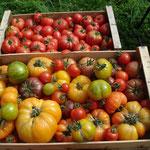 paniers légumes bio viuz-en-sallaz
