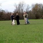 Gruppentraining Junghunde