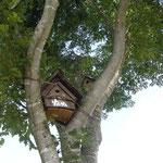 古民家の庭に集まれ小鳥たち