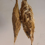 Kokon  Lehm Pflanzenfasern   26 - 30 cm