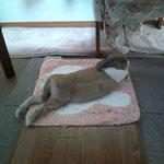 テーブル下のホットカーペット。2010年11月30日