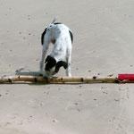 Strandwächter Zoé