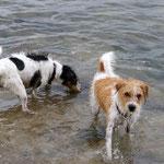 See-Hunde