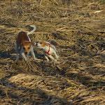 und mit Abby über die Felder getobt
