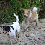 fröhliche Hunde