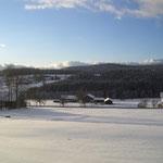 Ausblick von der Terrasse auf die Wiese und den Wald aufn Kronberg